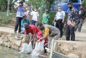 Ribuan Benih Ikan Jelabat Ditebar Di Pringsewu