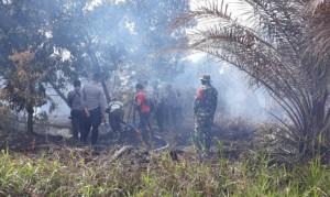 Kebakaran Lahan Di Mesuji, Camat Dan BPBD Beda Keterangan