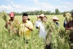 Lampung Bangun Pusat Pembenihan, Gubernur Siapkan Lahan Seribu Hektare