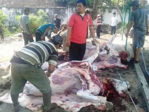 Berbagi Sesama, PTPN VII Potong 50 Hewan Kurban