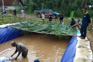 Bantuan Program Budidaya Ikan Air Tawar, Pemkab Mesuji Targetkan Bangun Enam Ribu Kolam