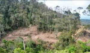Rumuskan Solusi Penanganan Kerusakan Hutan, Lampung Akan Gelar Diskusi Publik Nasional