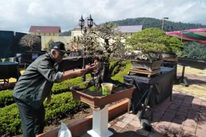 Bonsai Berbandrol Fantastis Ikut Pameran Di KRL