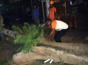 Satu Orang Tewas Tertimpa Pohon Di Metro