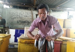 Pasokan Ikan Di Pesibar Berlimpah, Harga Anjlok