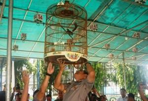 Tujuh Provinsi Ikut Lomba Burung Kicau Kapolda Cup