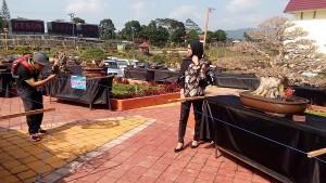 Kontes Bonsai Nasional, Jadi Tren Swafoto Warga Lambar