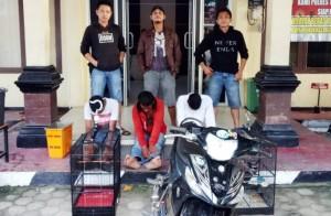 Polisi Bekuk Pencuri Burung Kicau Di Tulangbawang