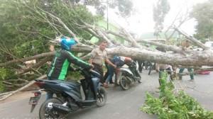 Angin Kencang Tumbangkan Pohon Di Metro