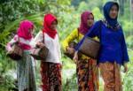 'Bebay Ngantak Uyan Sasuduk' Warnai Festival Teluk Stabas V