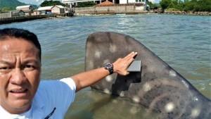 Kemunculan Hiu Paus Bukti Ekosistem Laut Di Tegal Mas Terjaga