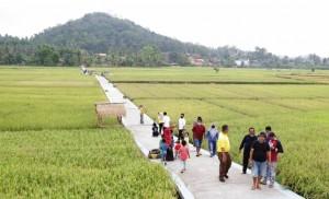 Jalan Sawah Jadi Obyek Wisata Baru Di Pringsewu