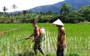 Wujudkan Ketahanan Pangan, Babinsa Koramil Sumberjaya Bantu Petani